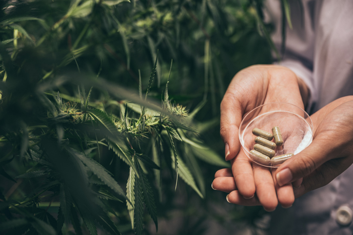 Is pain reduction from CBD all to your head? Researchers attach placebo kind to the test