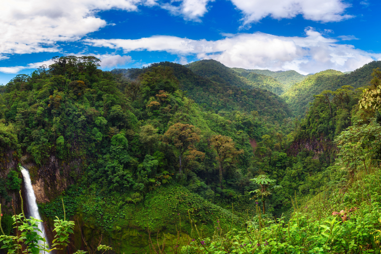 How Nestlé is leveraging agriculture and forestry to fight local climate commerce