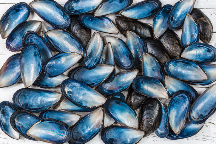 How mussels may most definitely well help solve the microplastics subject